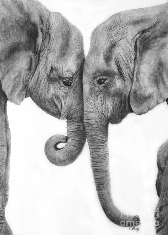 Elephant Love Drawing by Melissa Mancuso - photo#39