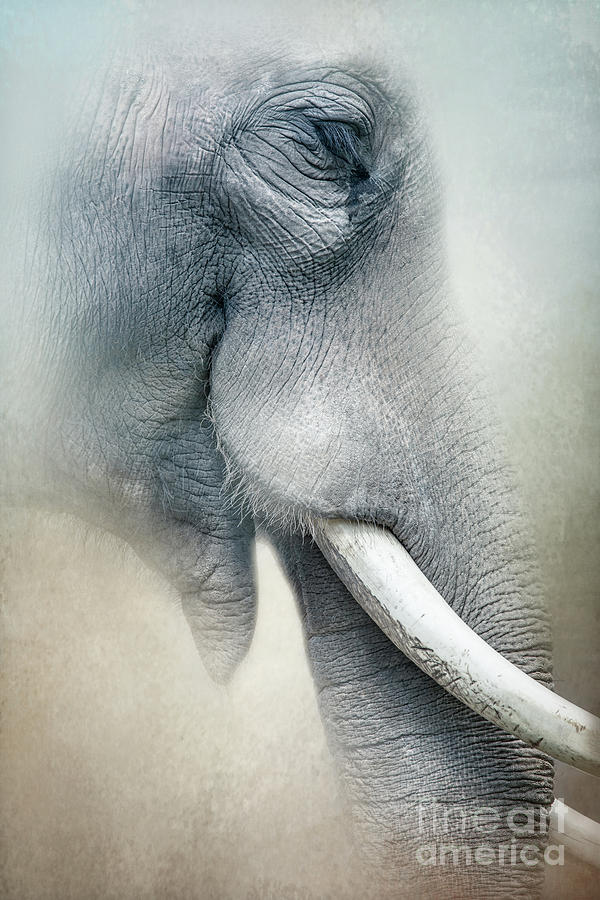 Elephant by Marco Fischer