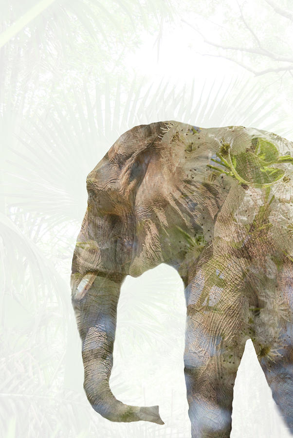 Elephant Palms Photograph