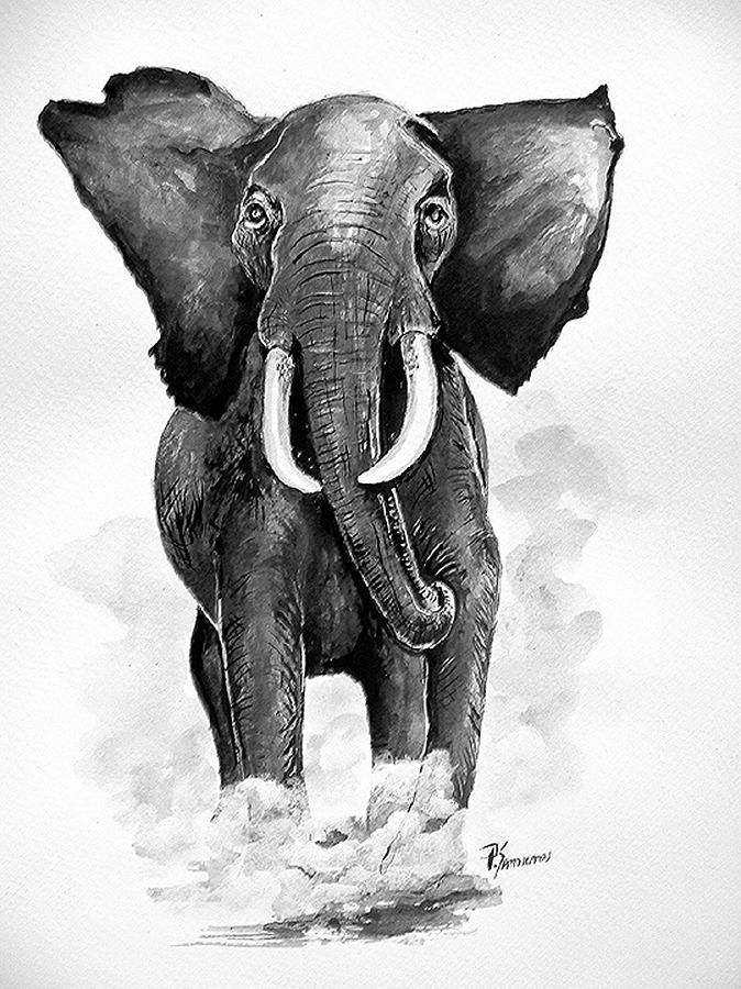 Elephant Painting - Elephant by Paul Sandilands