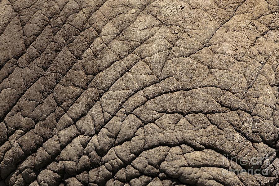 Zoo Photograph - Elephant Skin Background by Edward Fielding