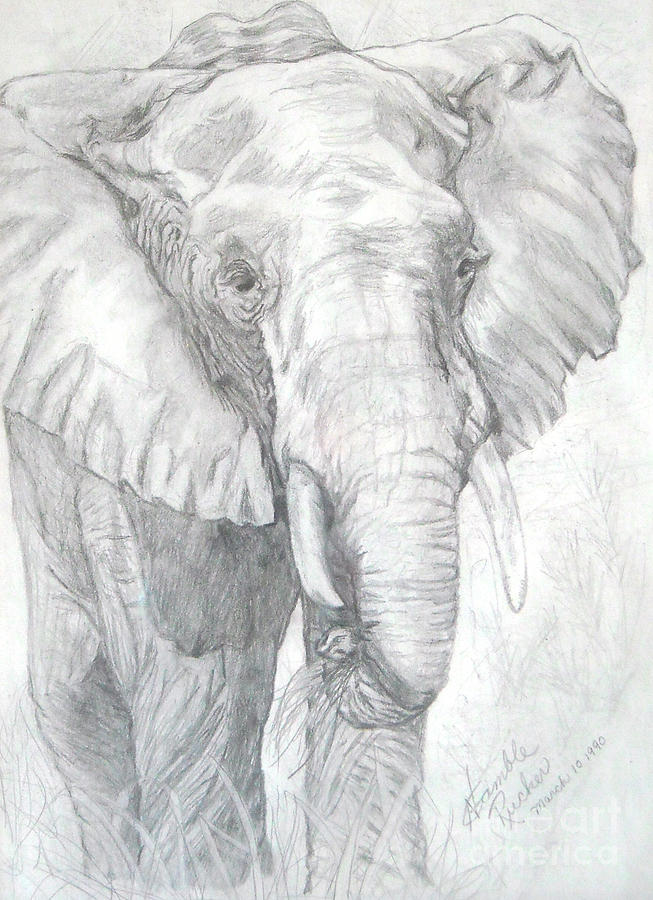 Elephant pencil drawing drawing elephant walk by nancy rucker