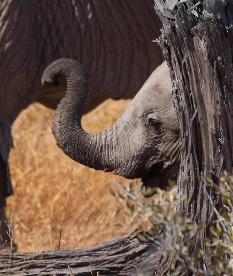 Elephants Photograph - Elephants - Shy Baby by Nancy D Hall
