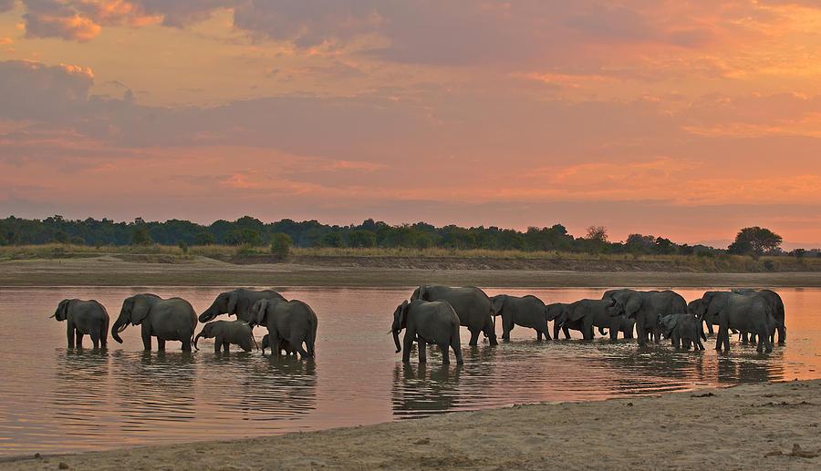 Africa Photograph - Elephants At Dusk by Johan Elzenga