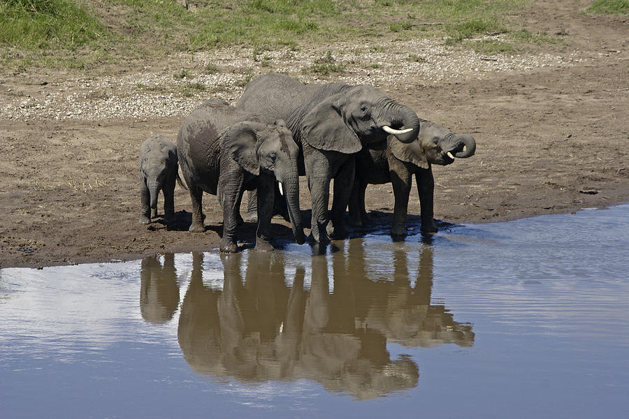 Africa Photograph - Elephants In The Mirror by Michele Burgess