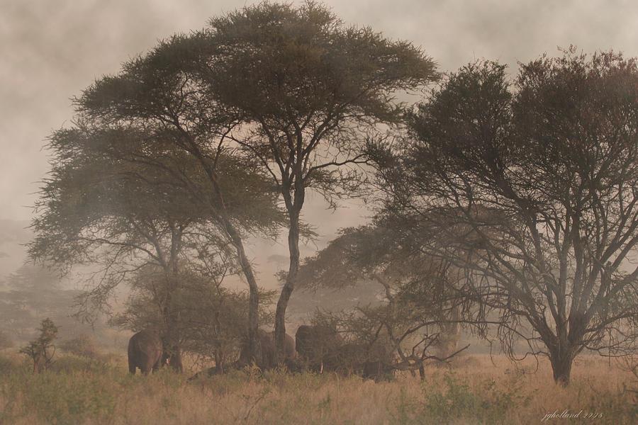 Tanzania Photograph - Elephants On The Serengeti Foggy Evening by Joseph G Holland