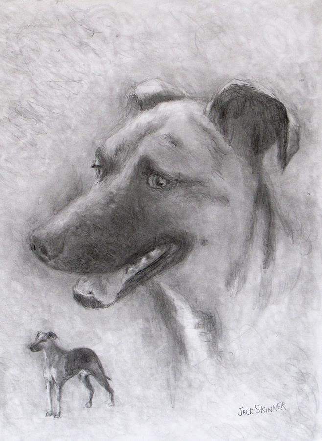 Dog Drawing - Eliot by Jack Skinner