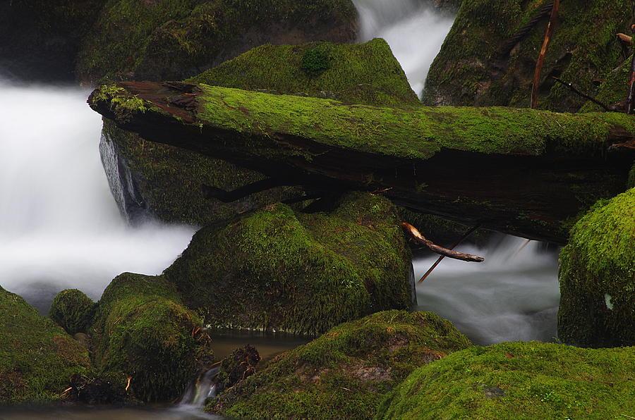 Elk Creek Detail 2 by Ken Dietz