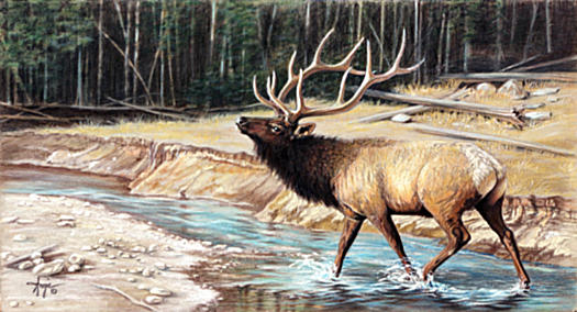Pencil Drawing - Elk Crossing by Angie Okamoto-Ong