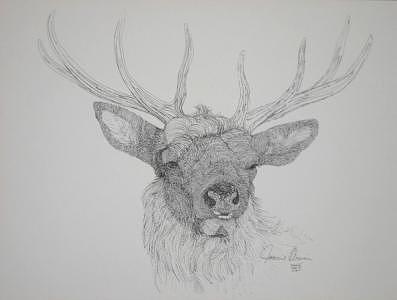 Print Drawing - Elk by Joanie Arvin