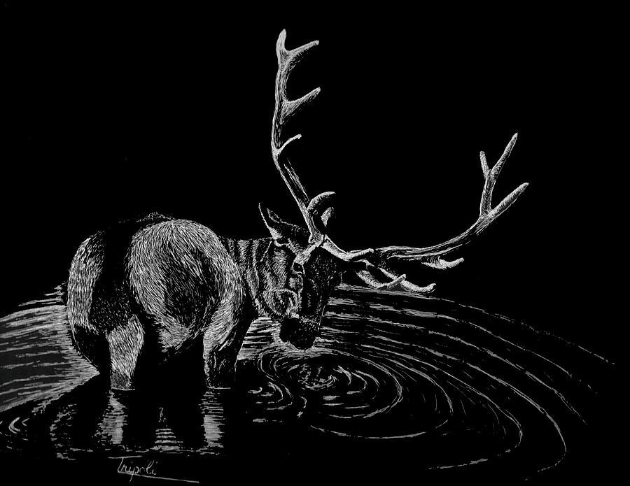Elk by Lawrence Tripoli
