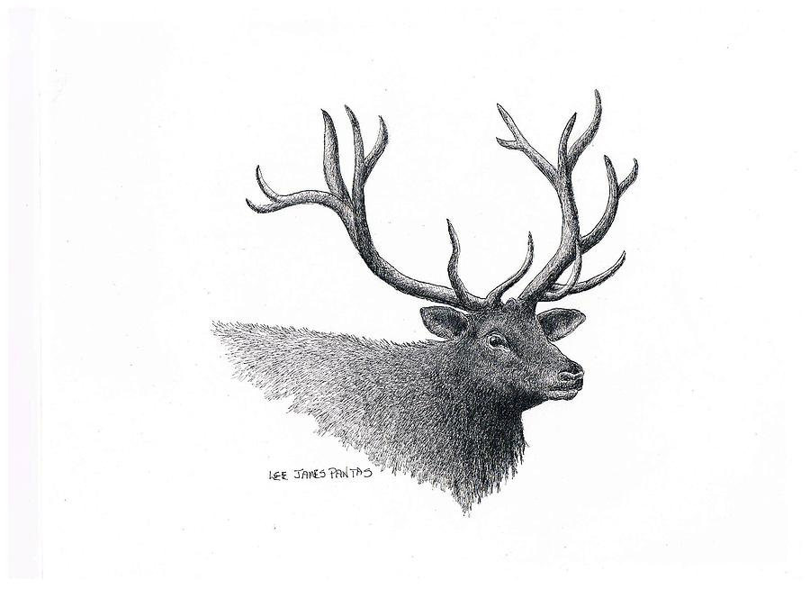 Elk Drawing - Elk by Lee Pantas