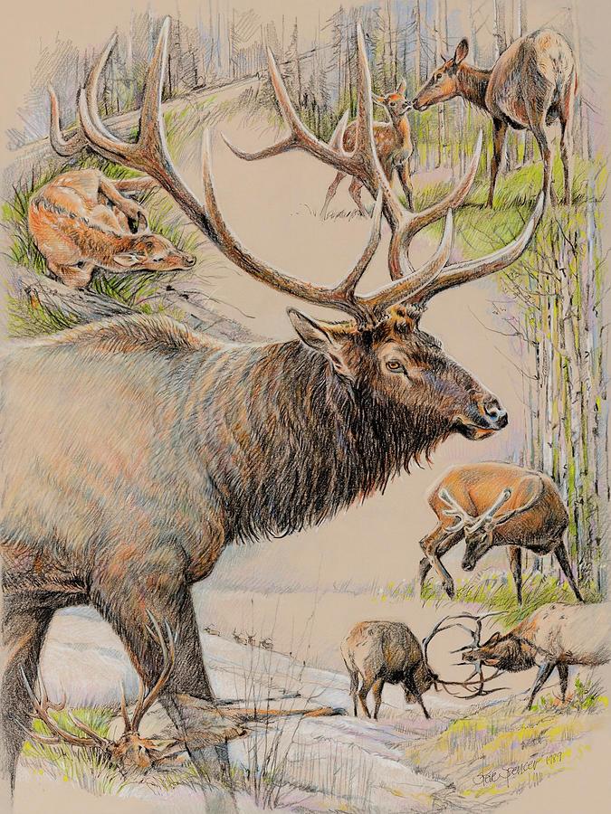 Elk Pastel - Elk Lifescape by Steve Spencer