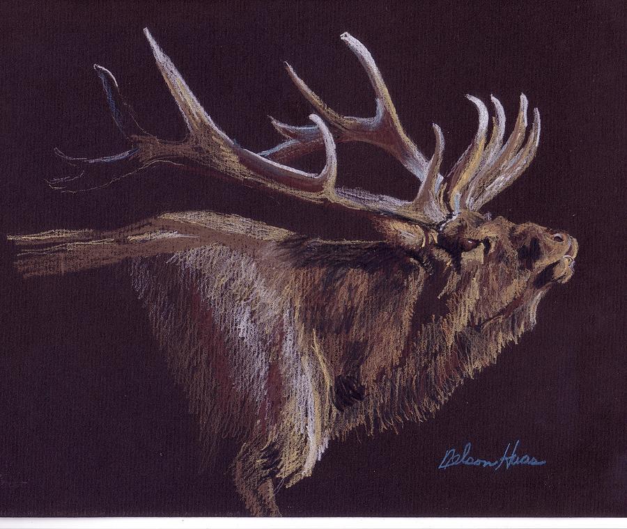 Elk Drawing - Elk by Nelson Haas