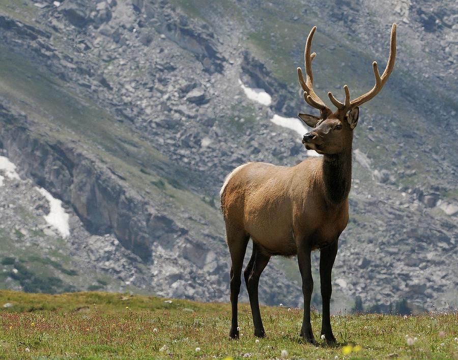Elk Viewing by Sue Jarrett
