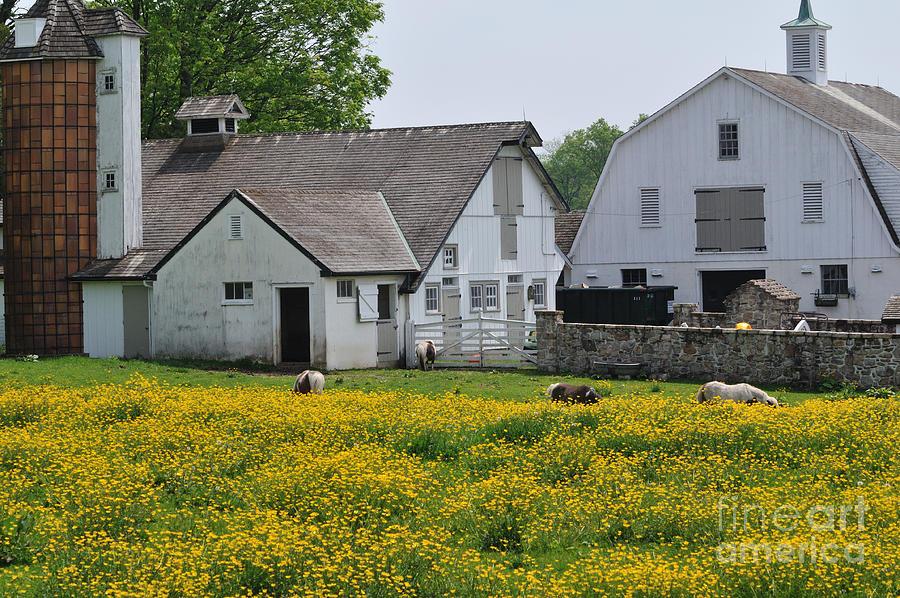 Elm Grove Painting - Elm Grove Farm by Cindy Roesinger