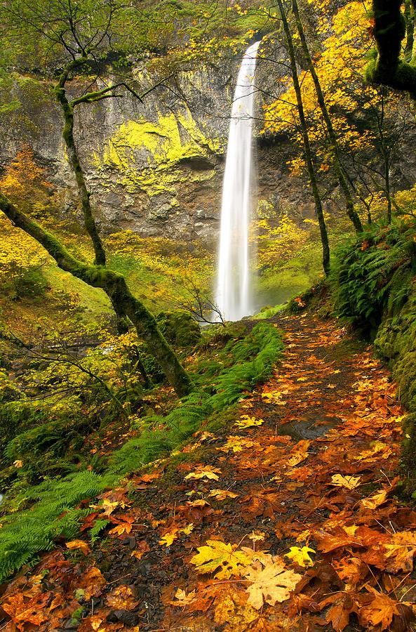 Elowah Falls Photograph - Elowah Autumn Trail by Mike  Dawson