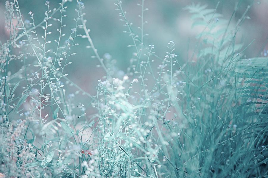 Grass Photograph - Elvish Worlds 1. Nature In Alien Skin by Jenny Rainbow