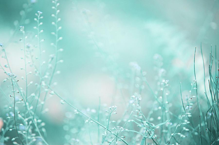 Grass Photograph - Elvish Worlds. Nature In Alien Skin by Jenny Rainbow