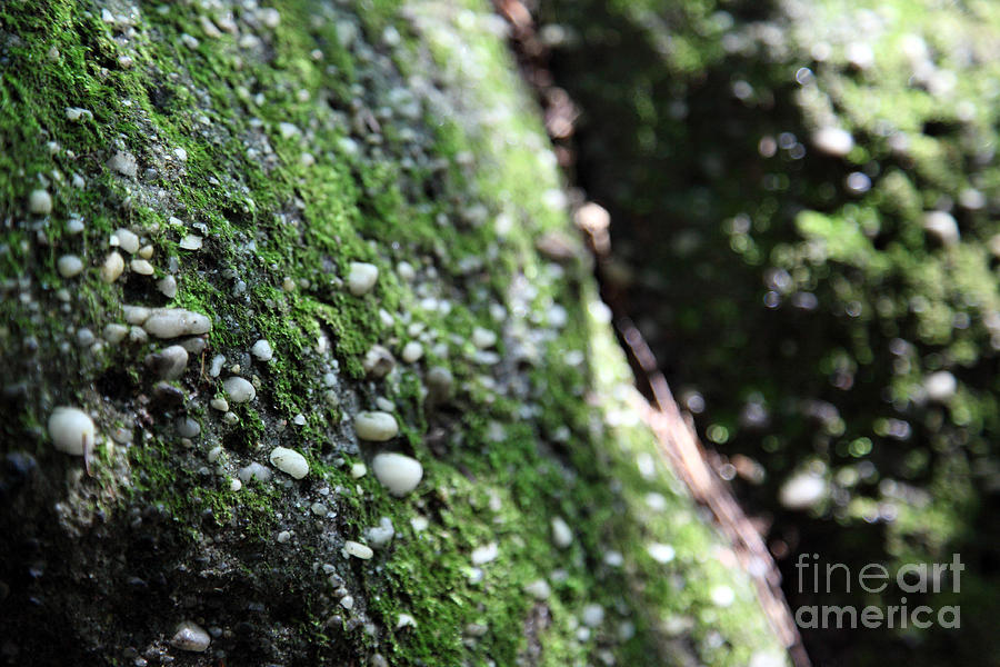 Rocks Photograph - Embedded by Amanda Barcon
