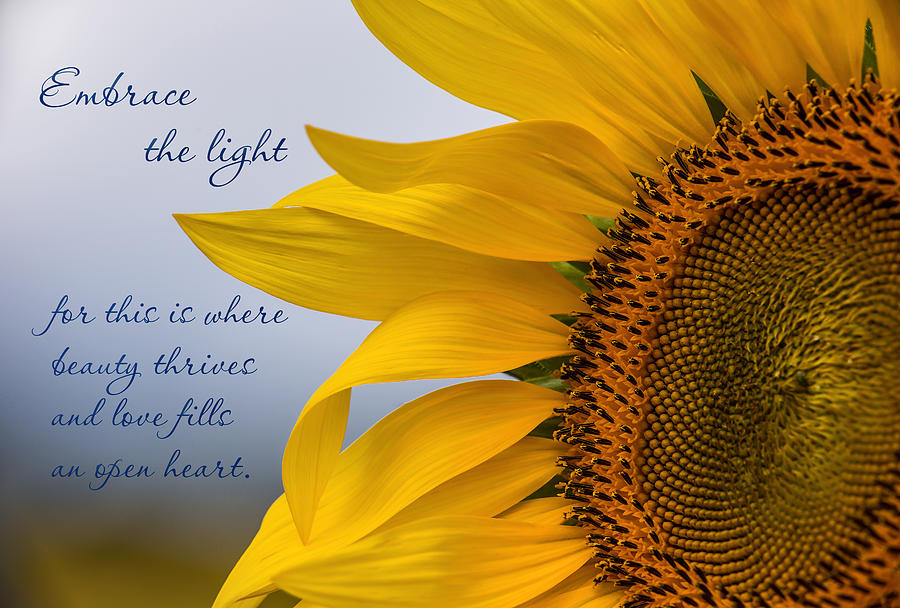 Sunflower Photograph - Embrace The Light by Dale Kincaid