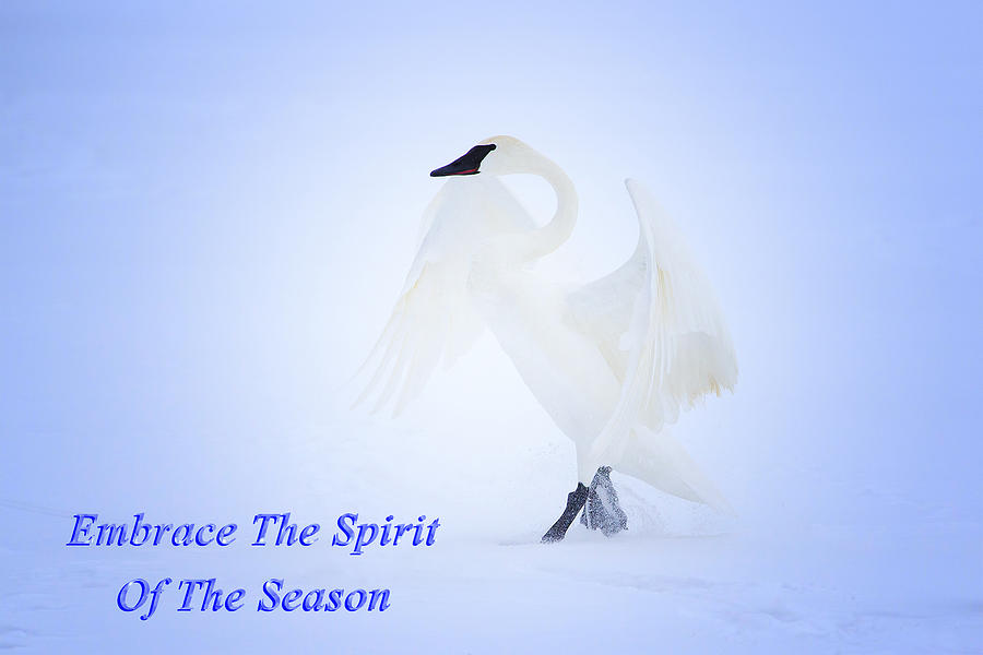 Swan Photograph - Embrace The Spirit Of The Season by Gary Hall