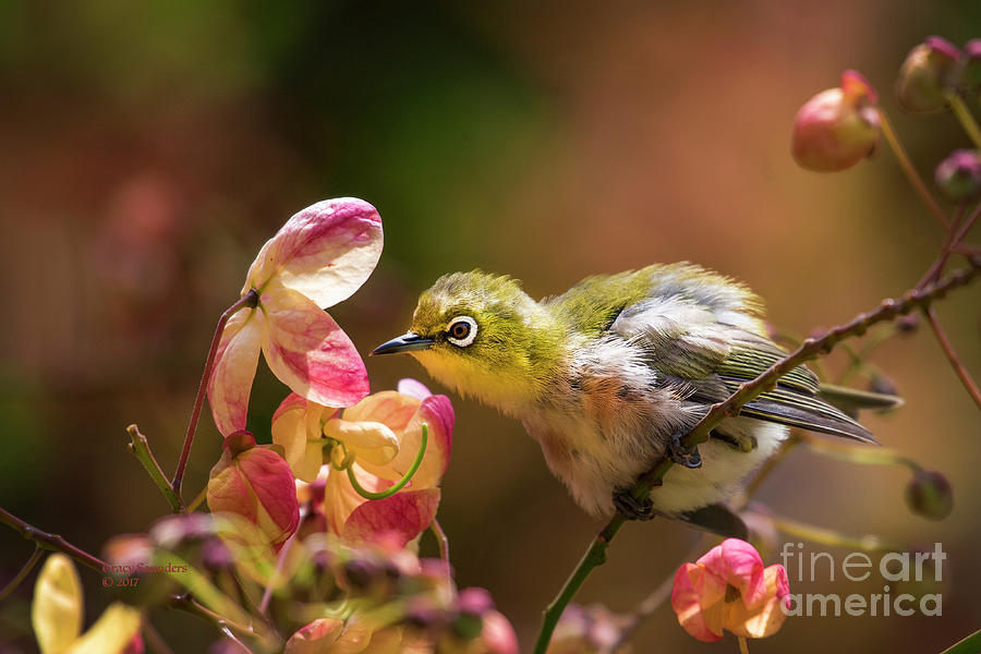 Bird Photograph - Emerald Baby by Tracy Saunders