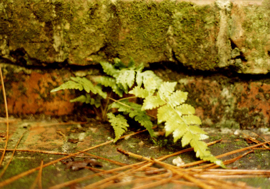 Ferns Photograph - Emerald Dream by Jan Amiss Photography