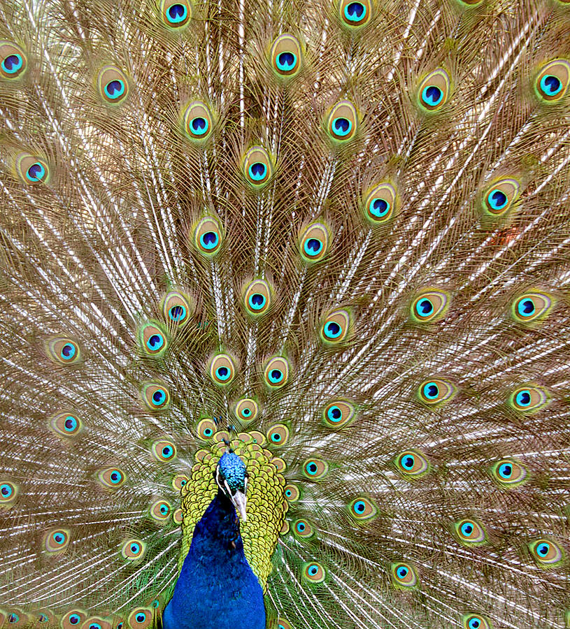 Bird Photograph - Emerald Feathers by Mark  France