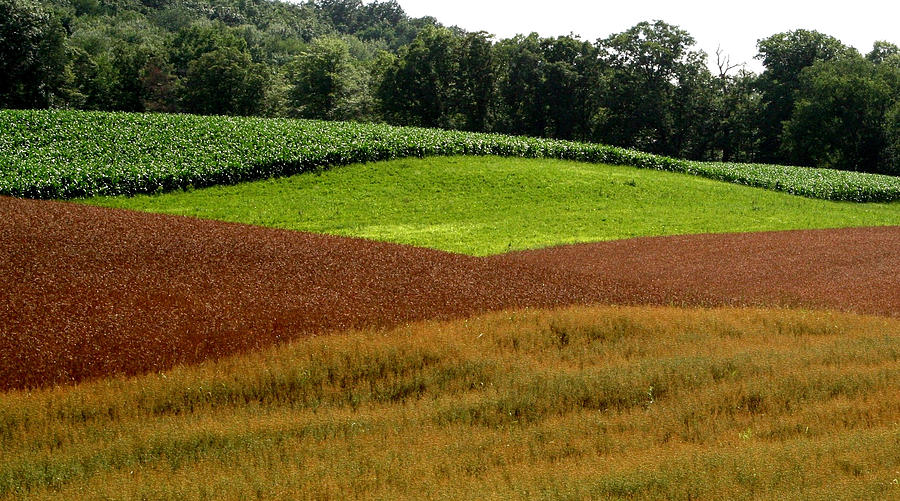 Digital Photography Photograph - Emerald Fields by Monika A Leon