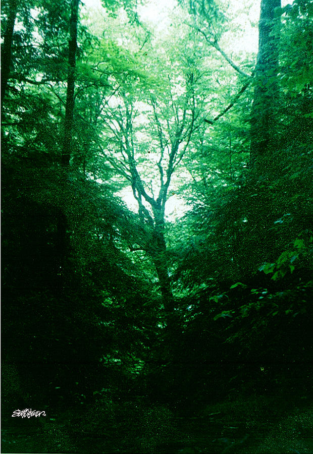 Emerald Photograph - Emerald Glade by Seth Weaver