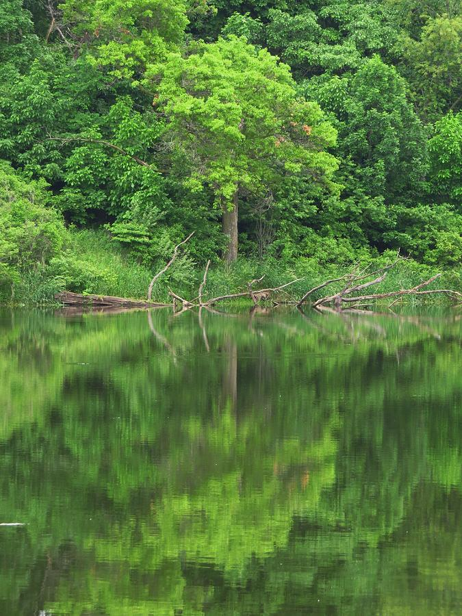 Trees Photograph - Emerald Green Reflections by Lori Frisch