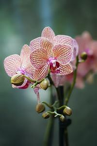 Orchid Photograph - Emerald Orchid by Deborah  DeAmroim