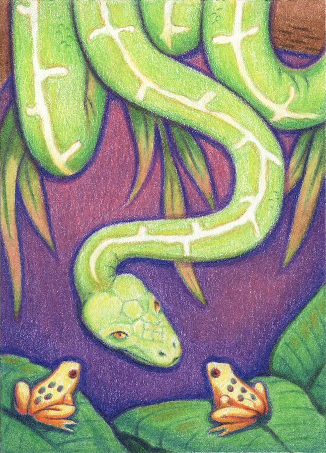 Snake Drawing - Emerald Tree Boa by Amy S Turner