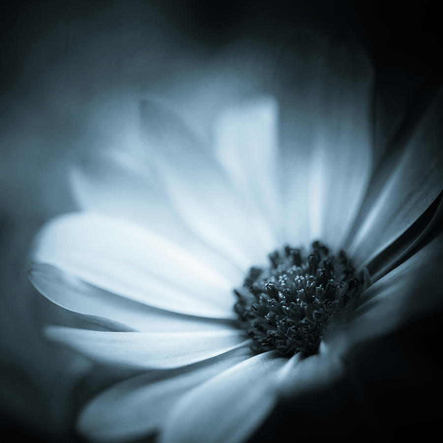 Flowers Photograph - Emergence by Lisa McStamp