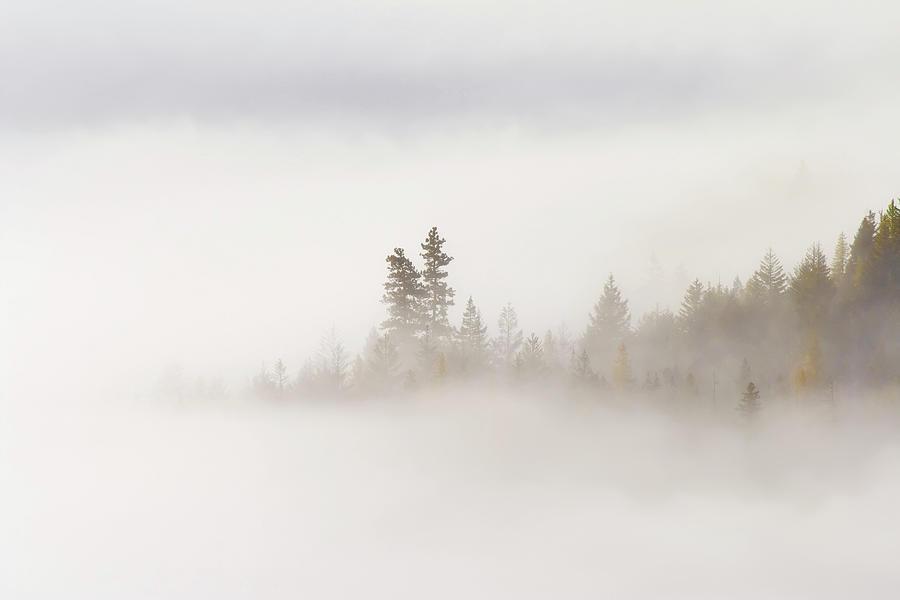 Fog Photograph - Emergence by Mike  Dawson
