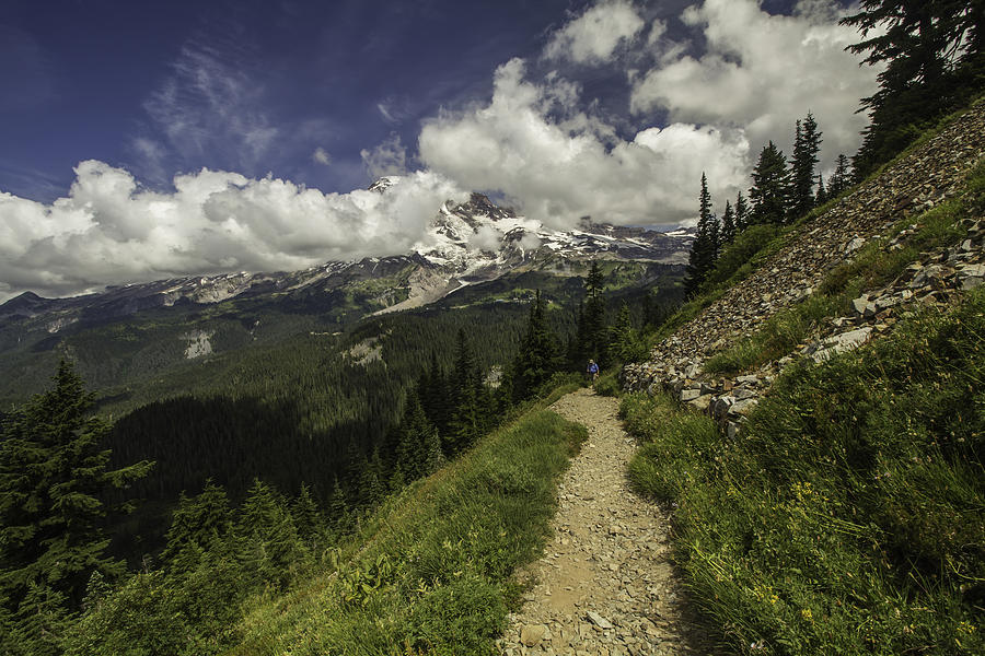 Emerging above Timberline by Doug Scrima