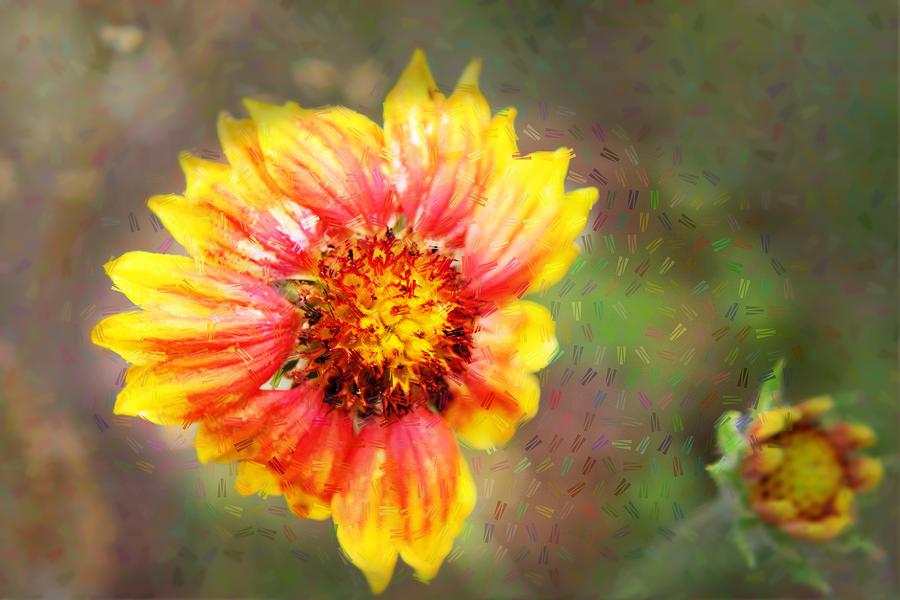 Flowers Photograph - Emerging by Lori Mellen-Pagliaro