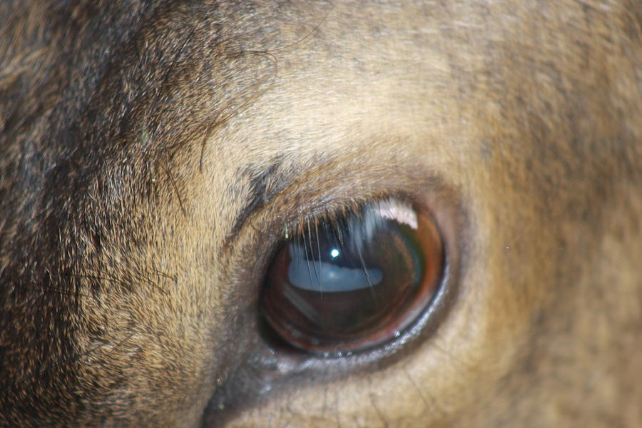 Elk Photograph - Emotion by Cathy  Beharriell