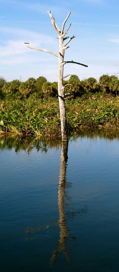 Everglades Photograph - Empty Branches by Fanny Diaz
