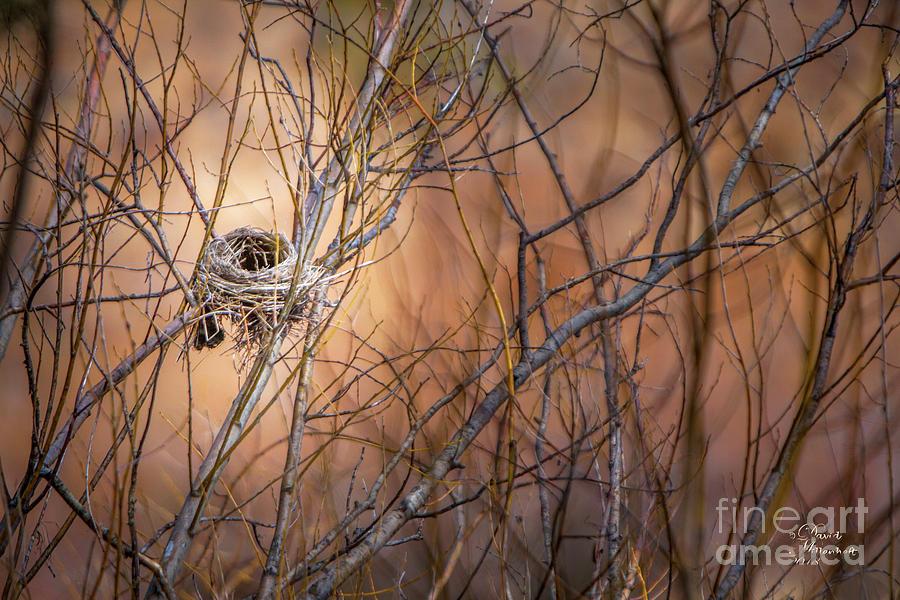 Empty Nest Photograph - Empty Nest by David Millenheft