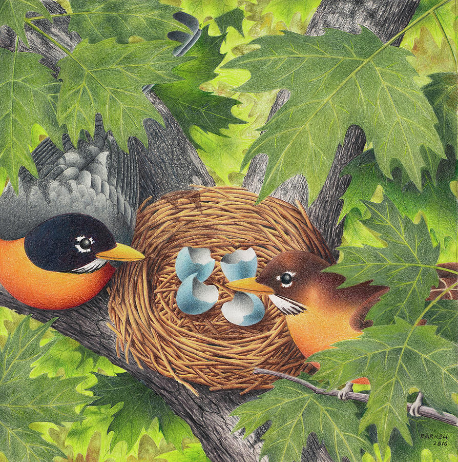 Drawing Drawing - Empty Nest by Mike Farrell