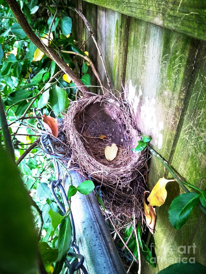 Nest Photograph - Empty Nest by Robert Knight