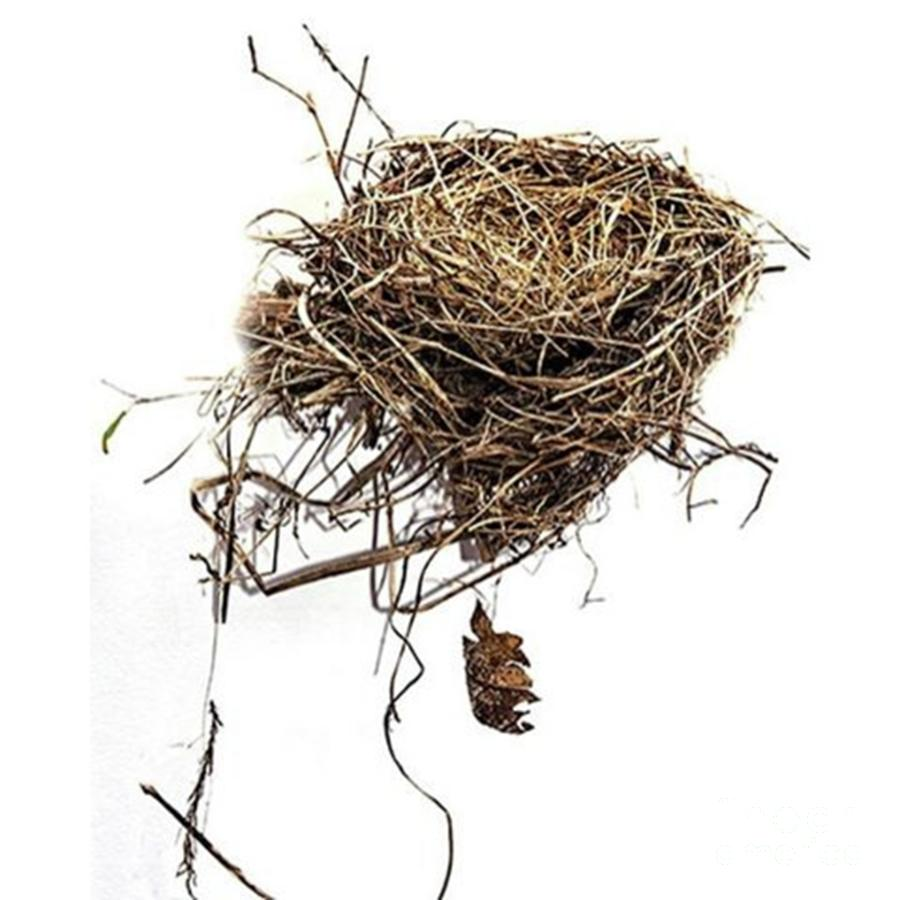 Nature Photograph - Empty Nest blown Out Of A by Larry Braun