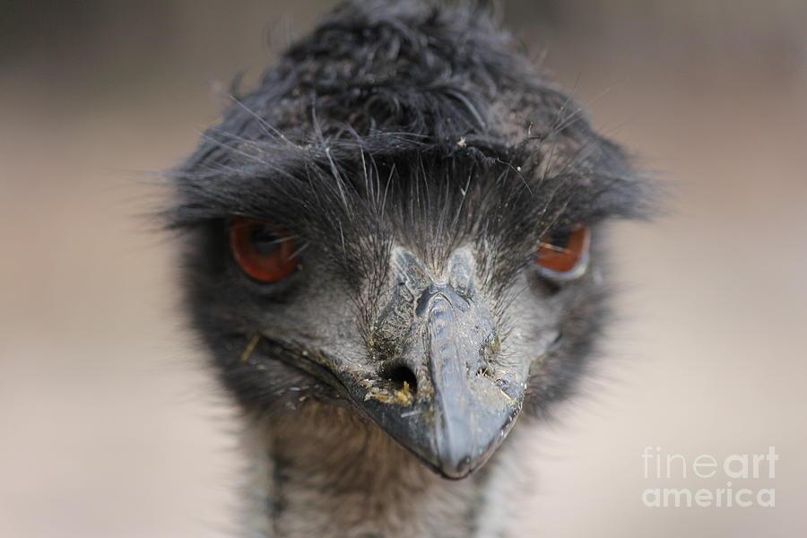 Australian Photograph - Emu by Roo Printz