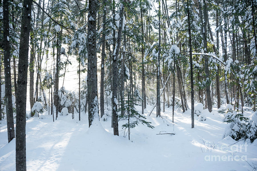 Snow Photograph - Enchante by Audrey Wilkie