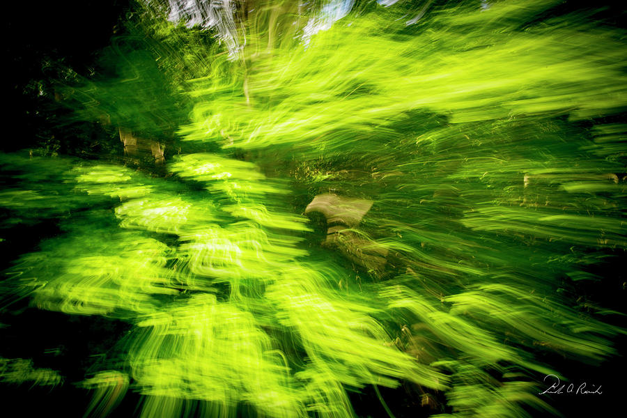 Color Photograph - Enchanted Forest 6 by Frederic A Reinecke