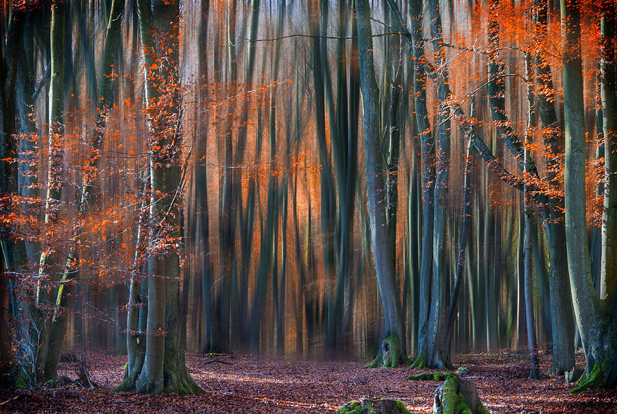 Landscape Photograph - Enchanted Forest by Em-photographies