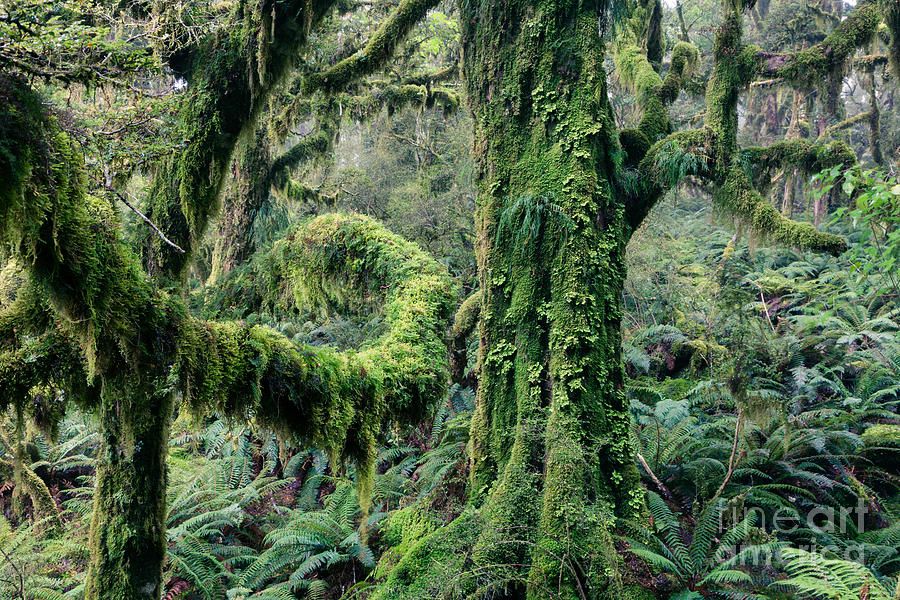 Enchanted Forest - Fiordland National Park - New Zealand ...