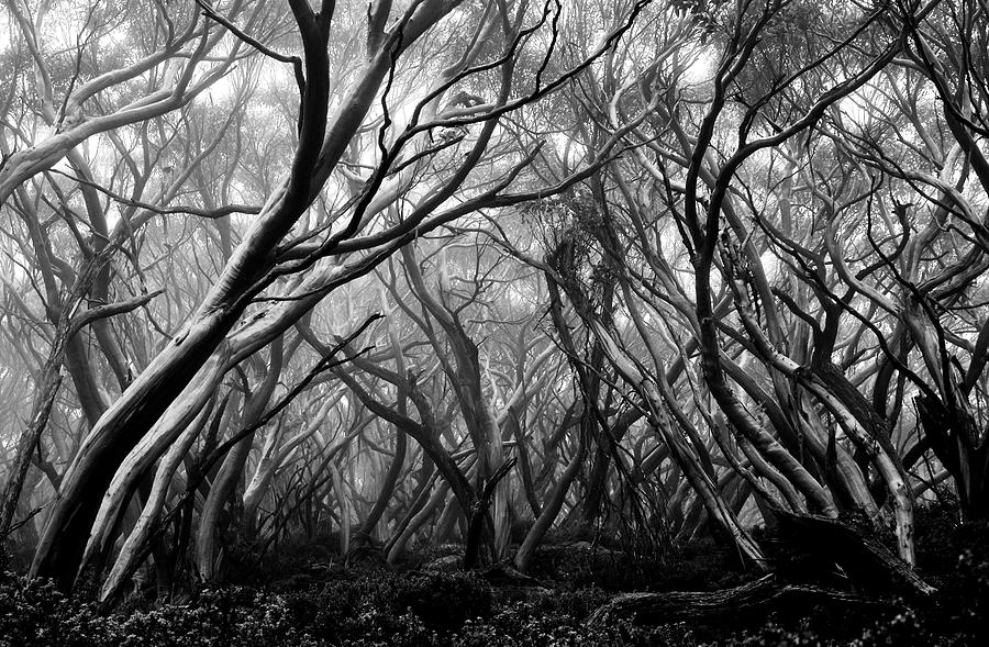 Enchanted forest by Mihai Florea